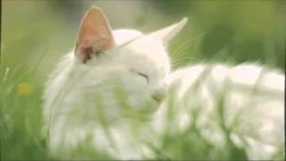 Релакс Мурчание кота