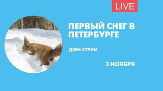 Фото Первый снег в Петербурге. Дзен-стрим