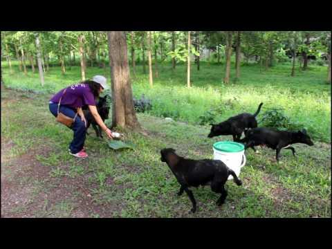 Feeding Stray Dogs In Thailand