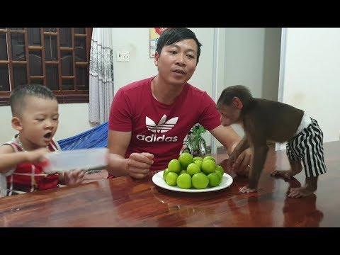 Baby Monkey | Funny Doo Loves Green Apples