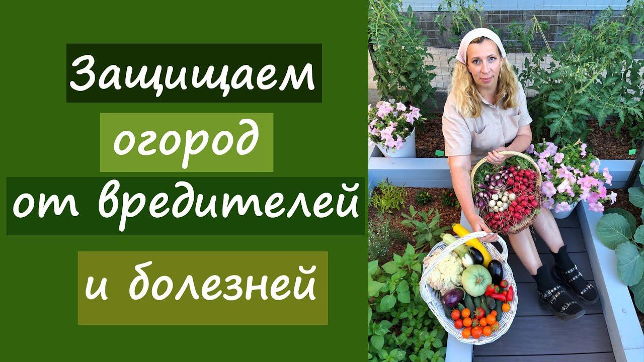 Защищаем огород от вредителей и болезней