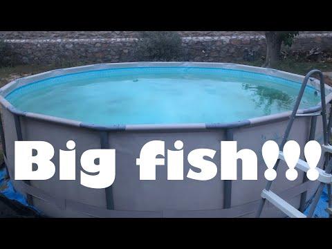 4400 Gallon Pool Pond