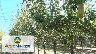 Progetto Pereto Sostenibile - Bayer Crop Science - Fondazione F.lli Navarra - Mariani