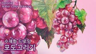 [수채화 드로잉] 포도그리기 | grape drawin…