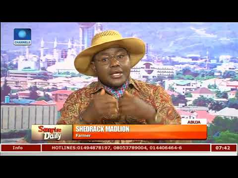 Benue Attacks: Nigeria Will Run Out Yam Seedlings By 2019 - Farmer  Sunrise Daily 