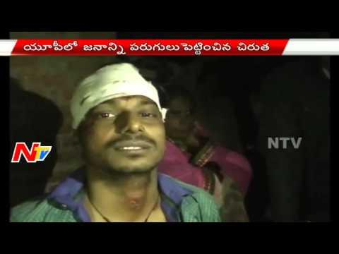 Tiger attack On Villagers in Uttar Pradesh - NTV