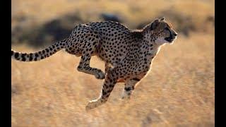 Удивительный мир животных 3 серия