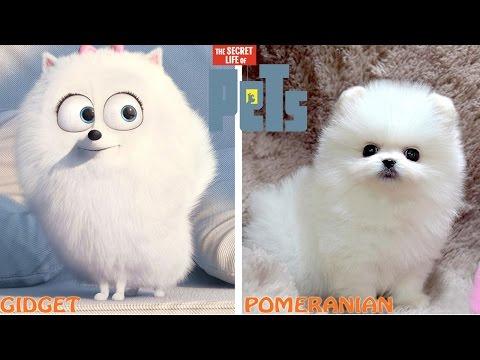Thumbnail: The Secret Life of Pets Characters in Real Life