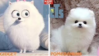 The Secret Life of Pets Characters in Real Life
