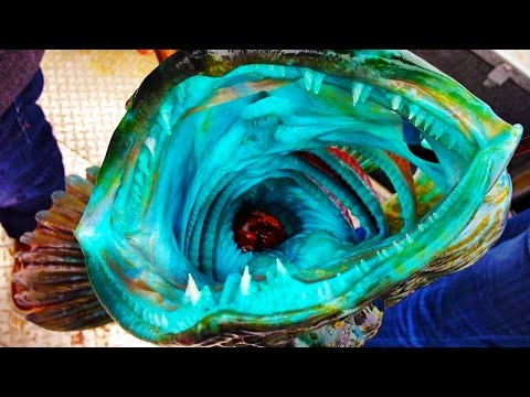 17 WEIRD Fish Photos Explained
