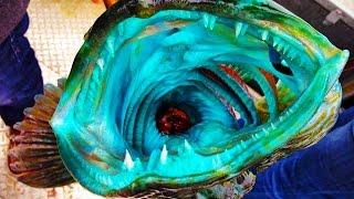 17 WEIRD Fish Photos Explained
