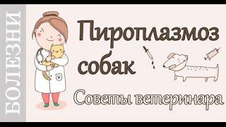 Пироплазмоз собак, Советы ветеринара по лечению.