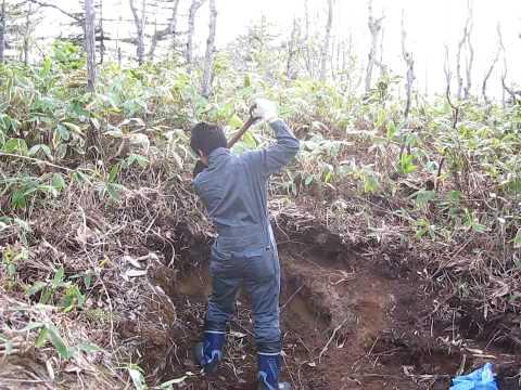 Sampling Podzol soil in Hokkaido