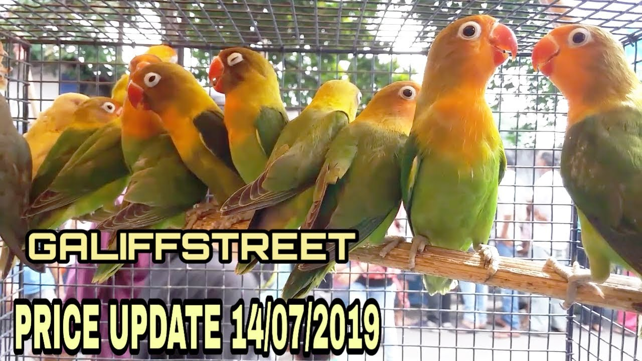 ALL BIRDS PRICE AT GALIFFSTREET BIRDS AND PET MARKET KOLKATA 14/07/2019HD