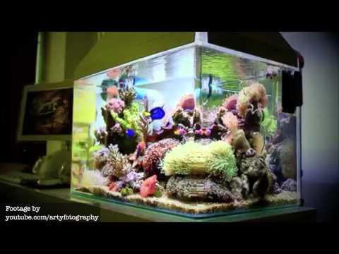 Beginner's Aquarium Guide Ep.1 - Blennies (+Nano News)