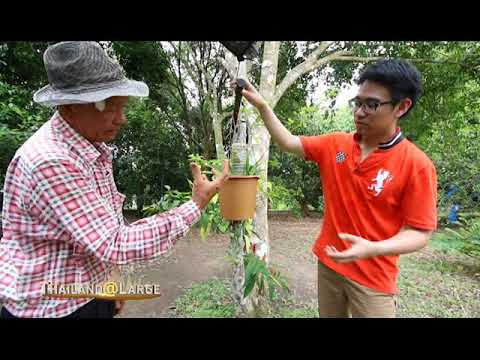 Thailand@Large Ep 33 Think Different and Be Creative at Sriya Garden