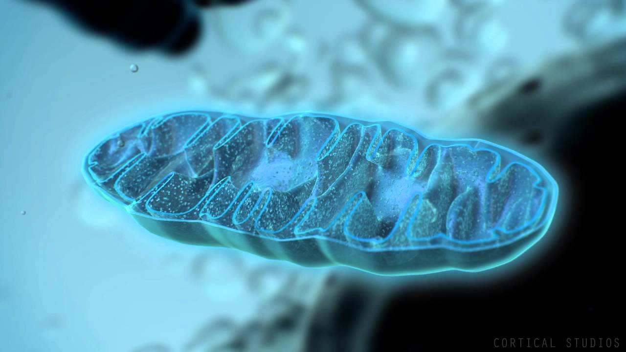 3d Action Wallpaper Hd How Mitochondria Produce Energy Youtube