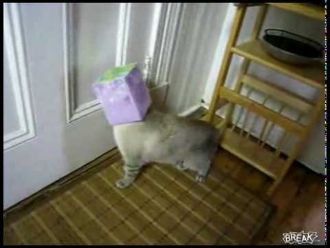 Cat Gets Head Stuck In Kleenex Box