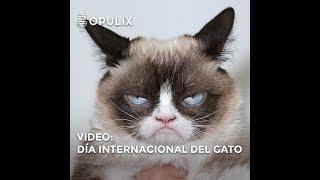 8 de agosto Día Internacional del gato