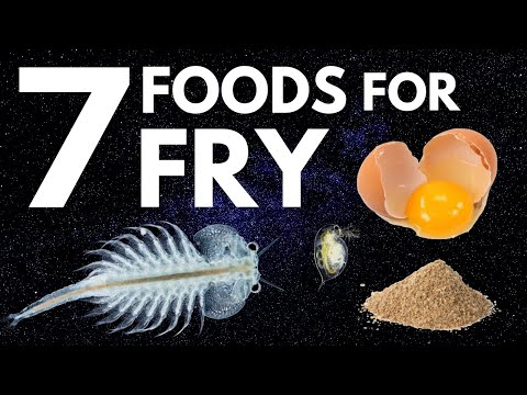 Top 7 Foods For Fry (Baby Fish)