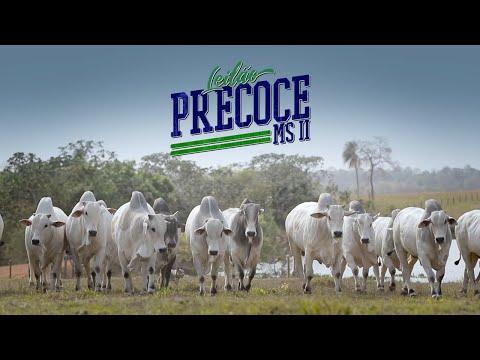 Leilão PRECOCE MS II