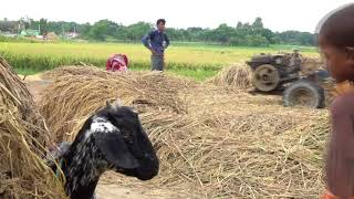 Arsenic and Rice Farming in Bangladesh thumbnail