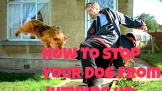 How To Stop Your Dog From Jumping Up On You And Other People