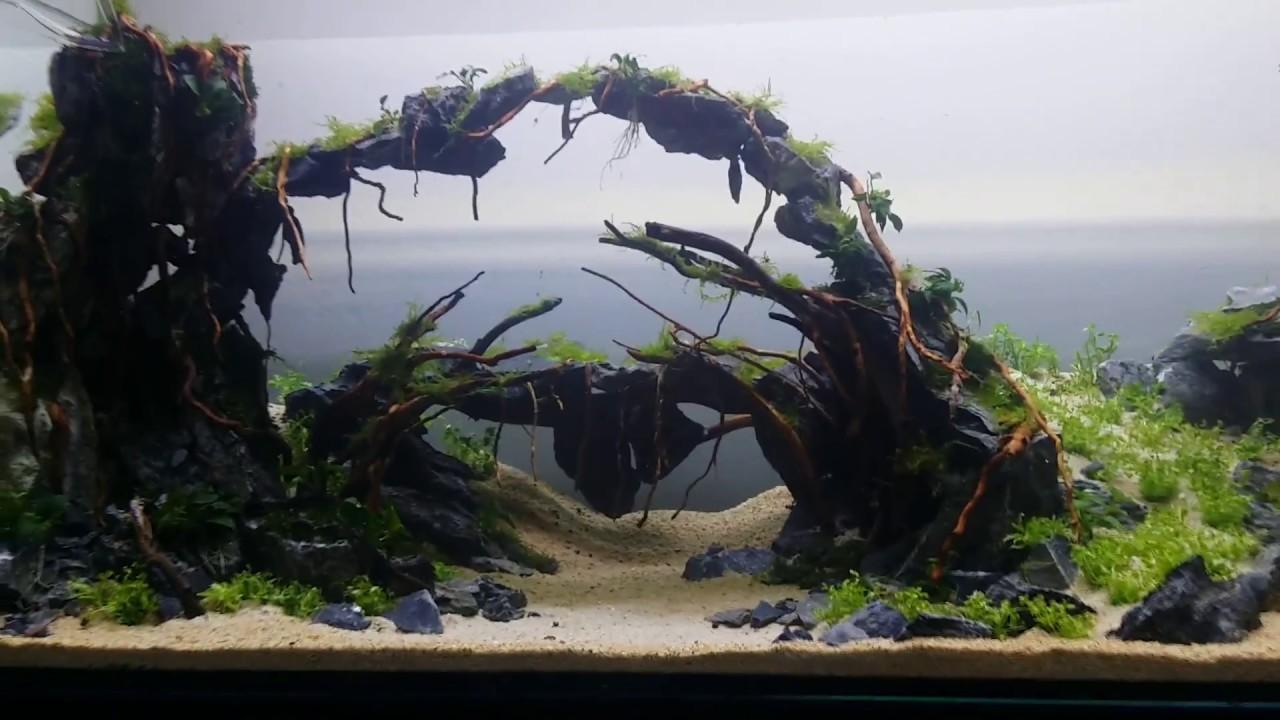 Cave Aquascape 120cm aquarium - UAE aquascaping - YouTube