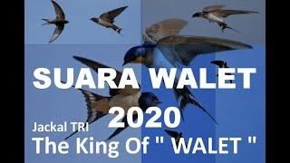 SP SWIFLET TERBAIK....SUARA WALET TERHEBOH PANGGIL TARIK INAP TERBARU 2020....super sedot koloni