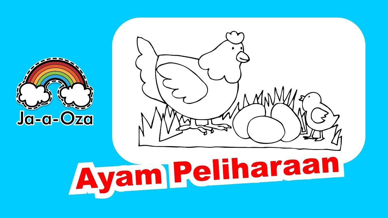 Mewarnai Gambar Ayam Sedang Bersama Anak Dan Telurnya Di Kebun