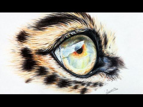 How to draw a realistic leopard eye in colored pencil | Leontine van vliet