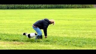 Pointer Puppy Training Aurach Okt 2011