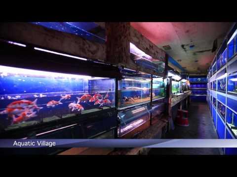 PFK Shoptour: Aquatic Village, Dublin