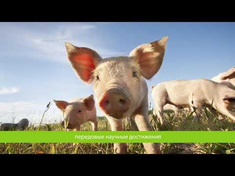 Phileo - корпоративное видео