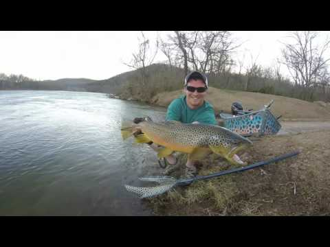 Big Arkansas Brown Trout