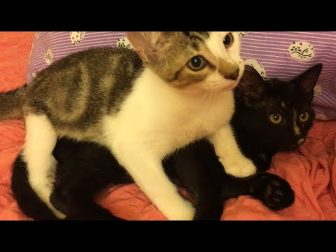 Last Foster Kitten Gets a New Friend!
