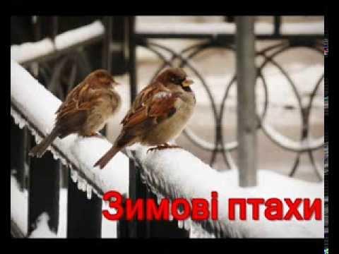 3имові птахи України