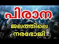 പിരാന മത്സ്യം   Piranha Fish   നരഭോജി   Piranha   Churulazhiyatha Rahasya   MT Vlog
