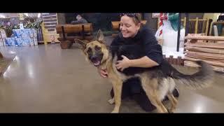 Best Dog Training in Columbus, Ohio! 11 Month Old German Shepherd, River!
