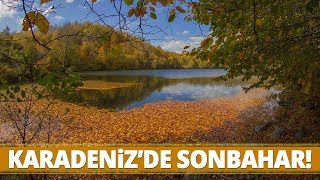 Karadeniz Ormanları Sonbahar'ın Gelmesiyle Kartpostallık Görüntüler Sunuyor