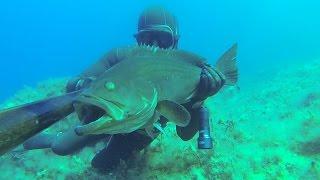 GRİDA(Golden Grouper) 3.1 Kg....32 metre