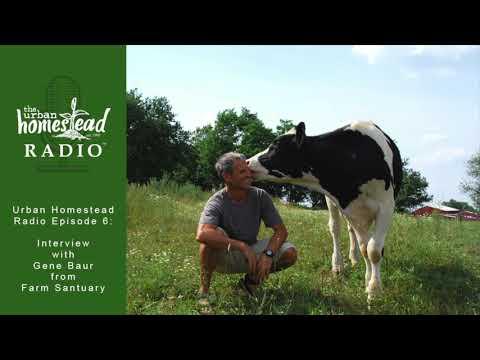 Urban Homestead Radio Episode 6: Gene Baur of Farm Sanctuary