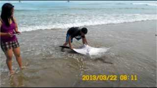 Manta rays captured and killed in Zamboanga del Norte
