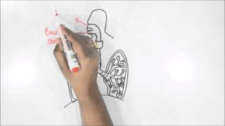 How to draw Human Respiratory system