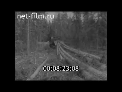 1963г. п.Лоймола. леспромхоз. Суоярвский район Карелия