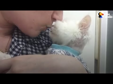 Cat Found Starving Is So Loved Now