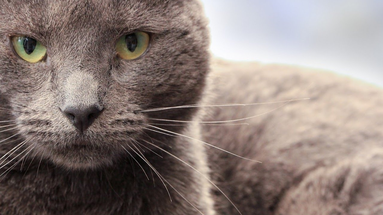 How to Keep Your Mature Cat Healthy
