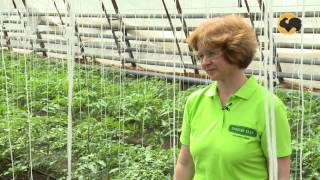 Сад и огород-117 Еще раз о томатах 2 ч