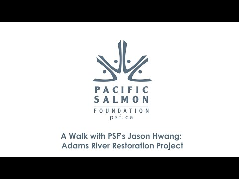 A Walk With PSF's Jason Hwang: Adams River Habitat Restoration