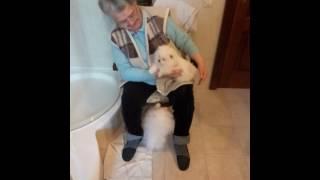 Померанский шпиц (померанец) — декоративная порода собак.